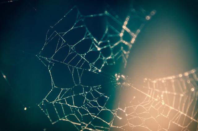ogni sistema complesso ha un'organizzazione a rete