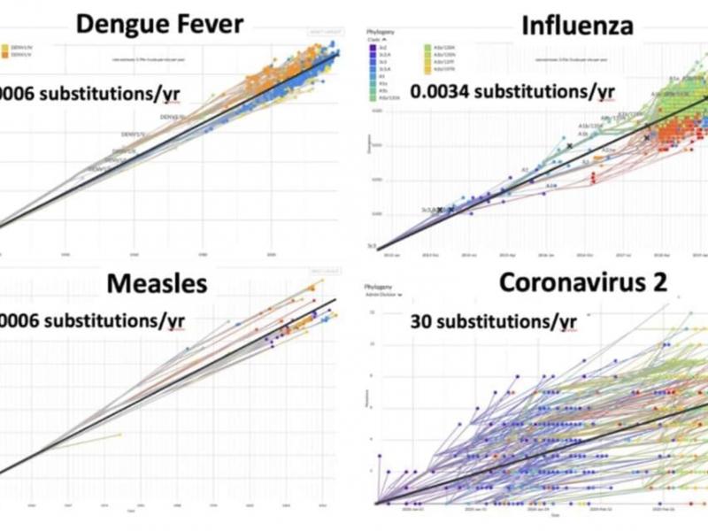 coronavirus mutazioni epidemia pandemia